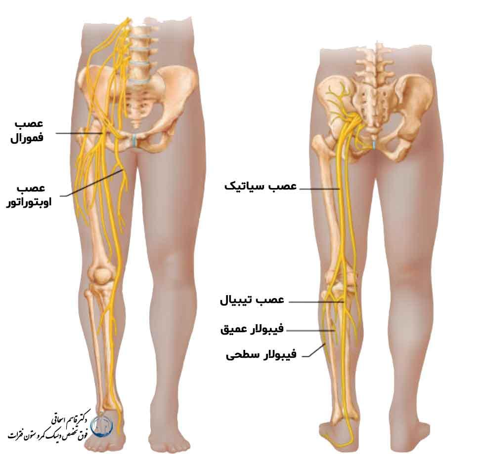 Leg nerves (obturator nerve, femoral nerve and sciatic nerve) and lumbar disc symptoms
