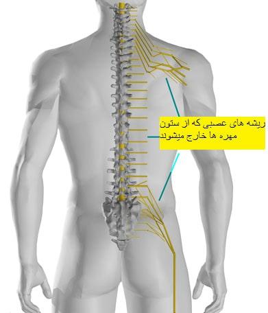 Lumbar disc nerve roots